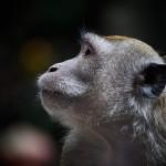 物語にグイグイ引き込まれる猿の惑星 創世記(ジェネシス)