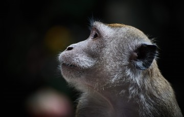 猿の惑星 創世期