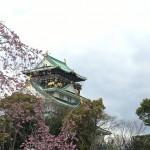 大阪の桜はココ!大阪城公園での花見は定番だけど割と空いてます 大阪府