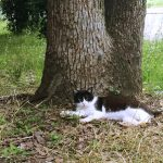 「さくらねこ」もいる長居公園は猫の楽園!猫好きは行くべし|大阪府