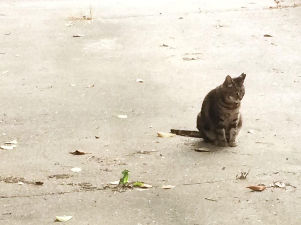 さくらねこ 長居公園 猫