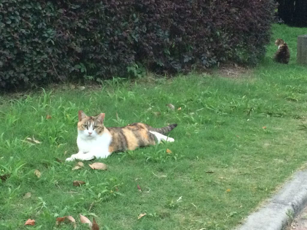 長居公園 猫 さくらねこ