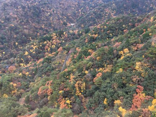 紅葉,ロープウェイ,御在所ロープウェイ,湯の山温泉