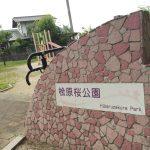 桧原桜って知ってる?福岡の感動ストーリーが生んだ桜の名所 | 福岡県