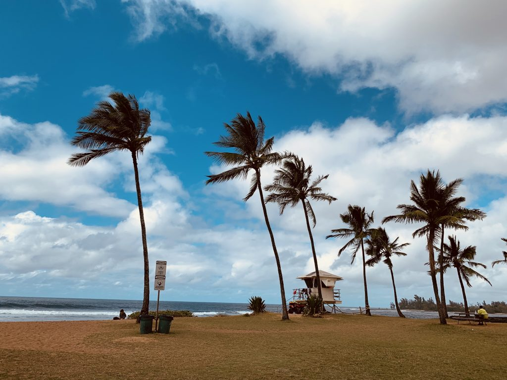 ハワイ,マツモトシェイブアイス,サーフィン,ハレイワ,レイズキアヴェ,レイズ,チキン,パタゴニア,駐車場,patagonia,
